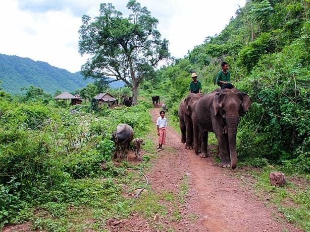 Myanmar - Kalaw Green Hill Valley Elephanten Camp junger Elefant
