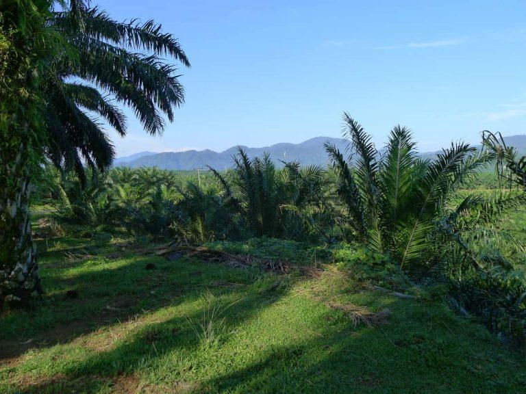 Sumatra Feld