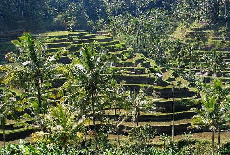 Kulturlandschaft auf Bali