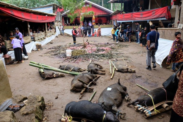 Indonesien - Toraja Beerdigungszeremonie