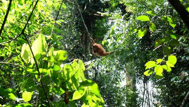 Indonesien - Sumatra