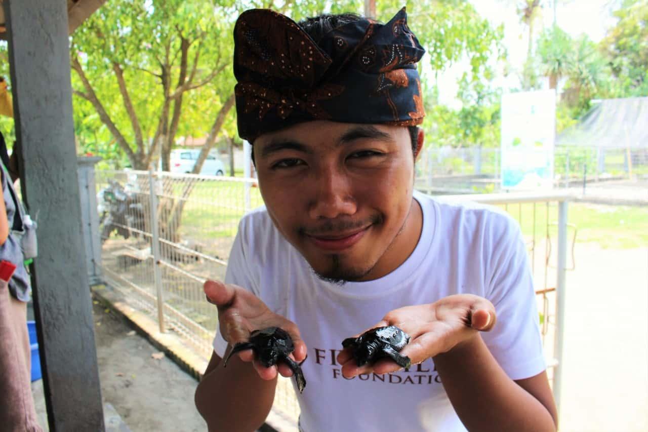 Schildkröte Bali