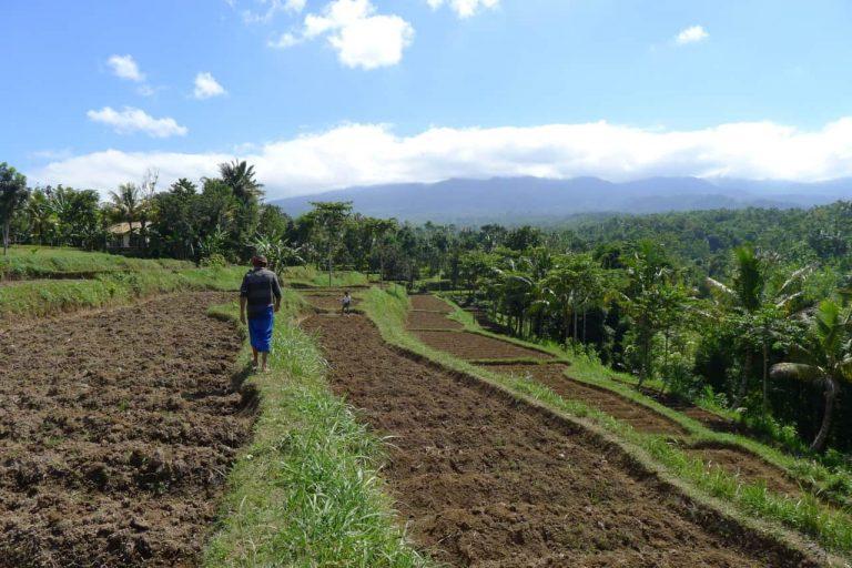 Indonesien Lombok Reisfelder