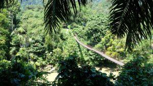 Sumatra Dschungel Bruecke