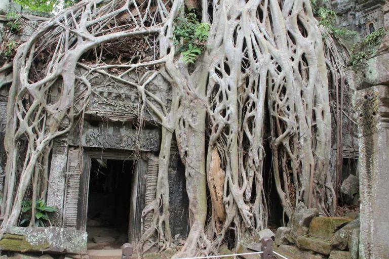 Kambodscha Ta Prohm Ueberwucherter Eingang