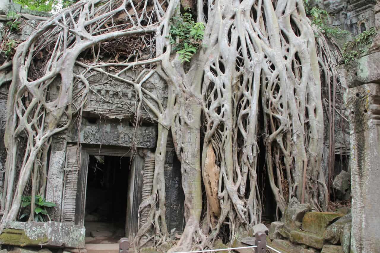 Kambodscha - Angkor Tempel - Ta Prohm überwucherter Eingang
