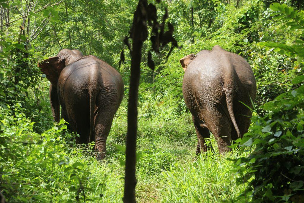 Elefanten im Dschungel