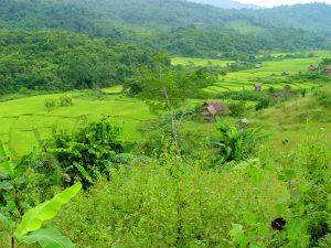 Luan Namtha