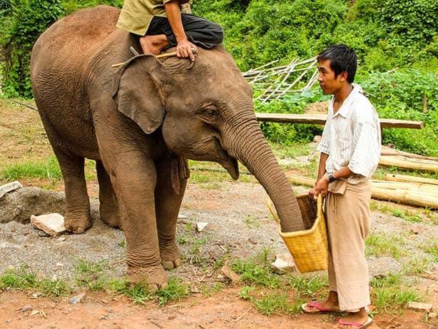 Kalaw---Green-Hill-Valley-Elephanten-Camp_junger-Elefant