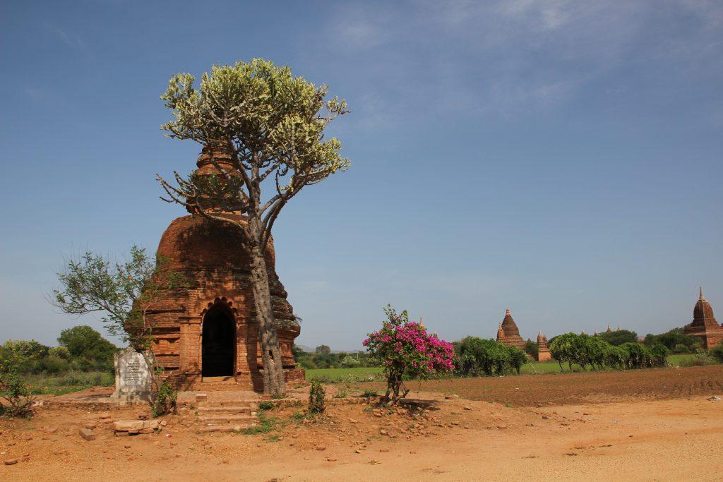 Bagan Trockenzone