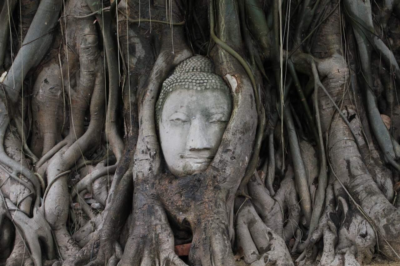 Thailand - Ayutthaya - Wat Maha That Statuenkopf