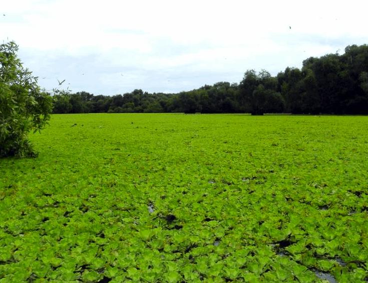 Vietnam - Mekong Delta - Tra Su Nationalpark