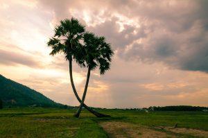 Vietnam Baum