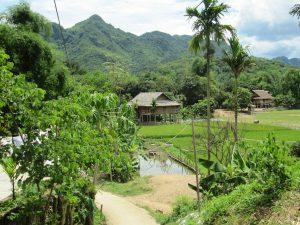Vietnam Moc Chau