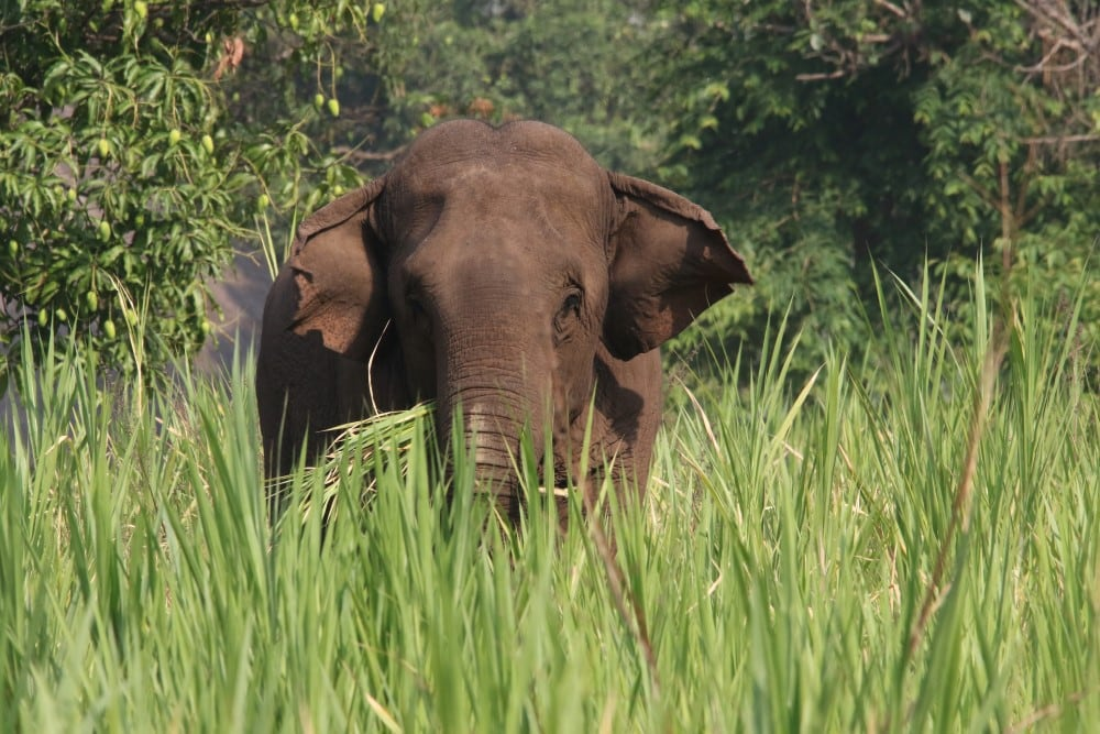 Kalaw Elefantencamp