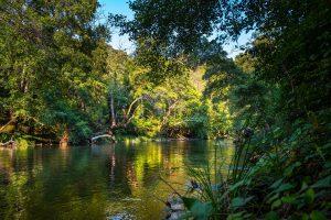 Regenwald mit Fluss