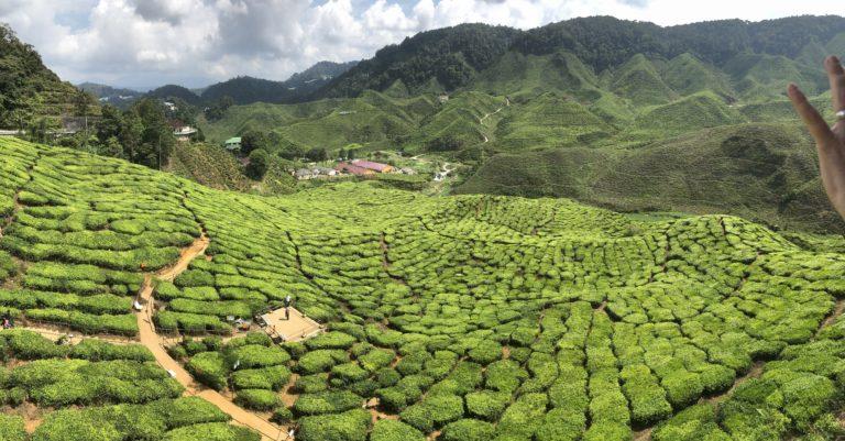 Malaysia Cameron Highlands Tee