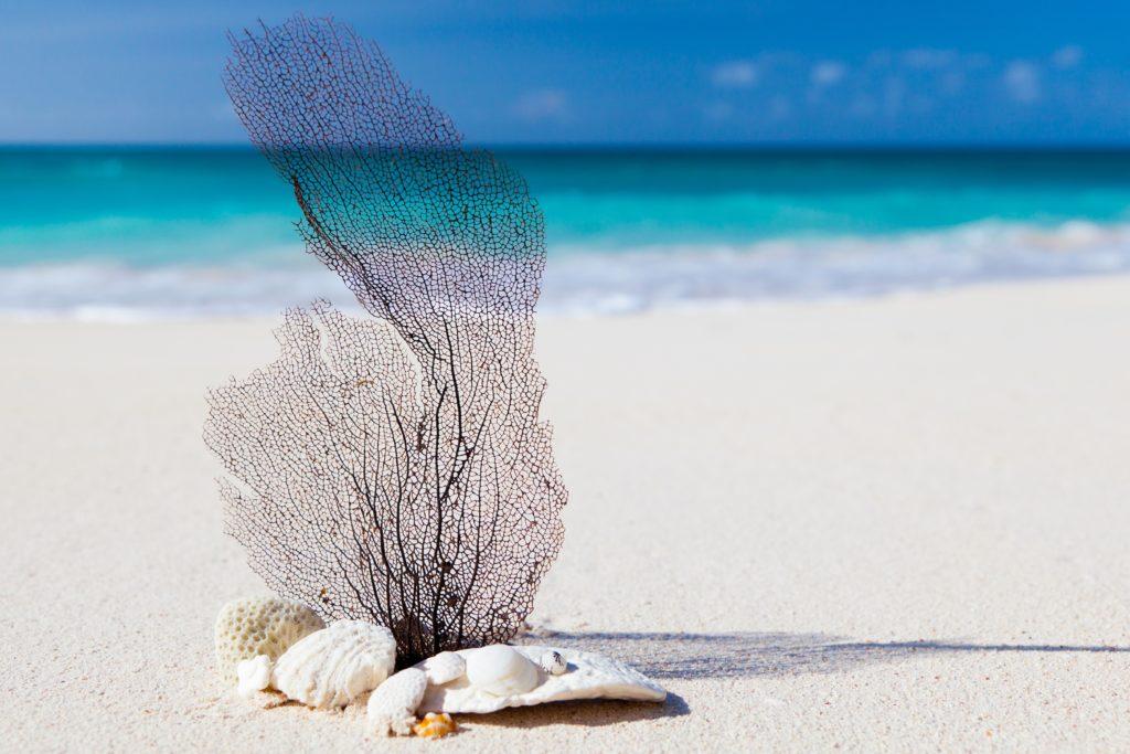 Suedsee Strand Korallen