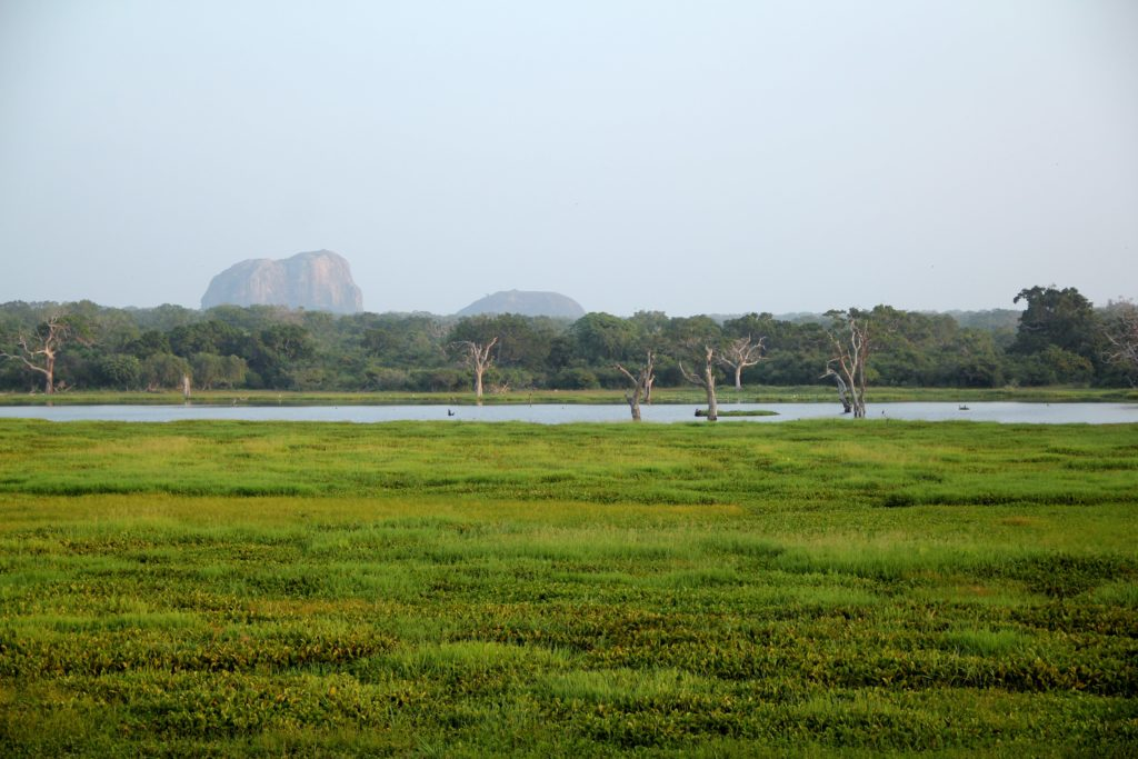 Sri Lanka Yala Nationalpark Safari Landschaft