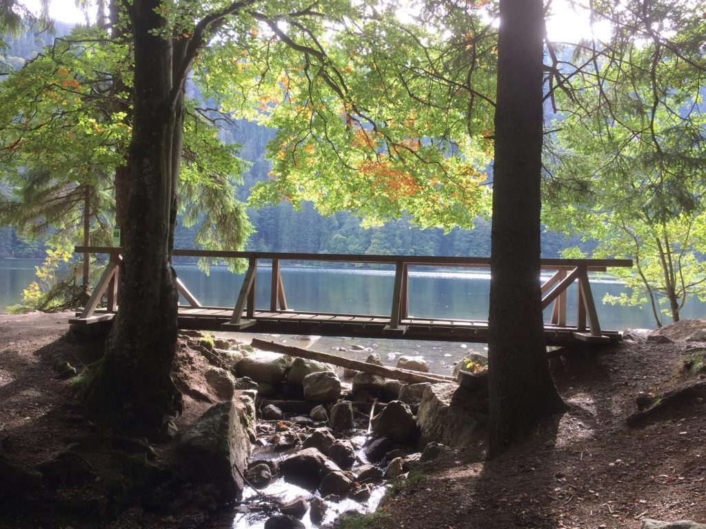 Schwarzwald Brücke