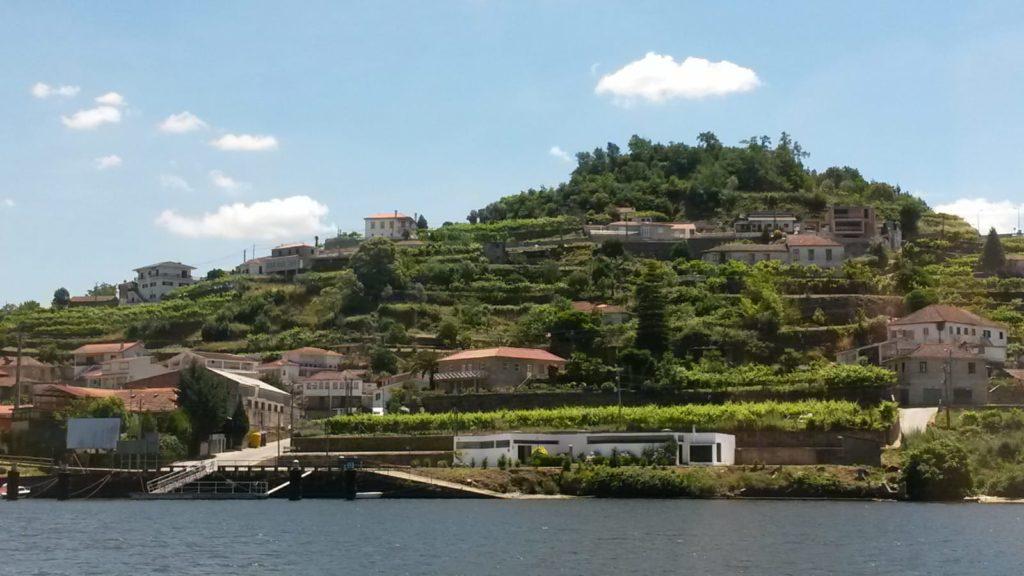 Portugal Douro Tal Weinberge