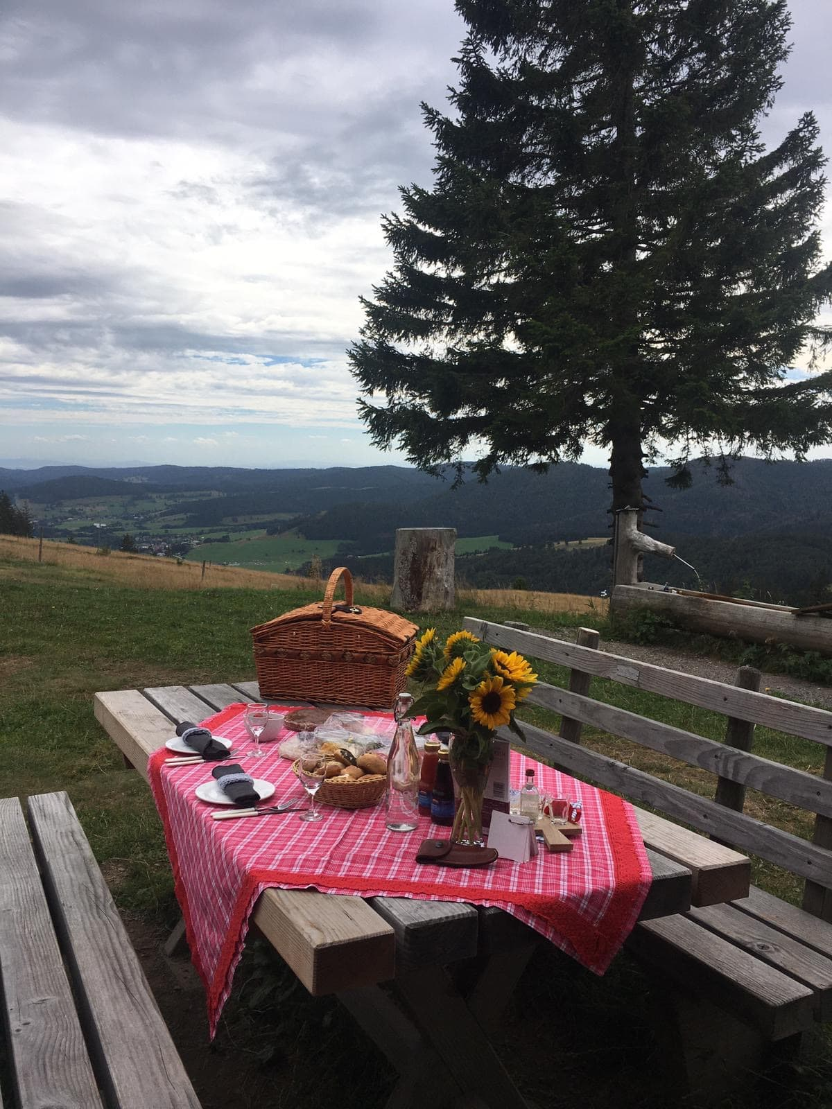 Schwarzwald Picknick Wald