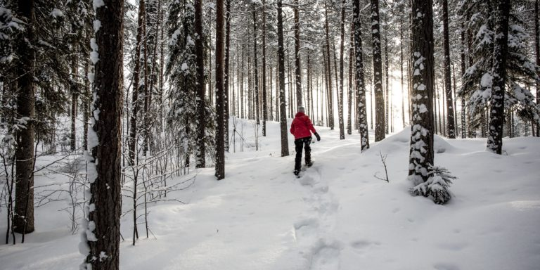 Snowshoeing in Råne River Valley