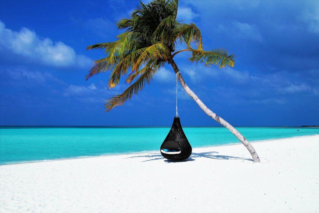 Malediven Palme mit Hängematte