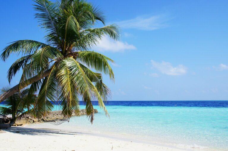 Malediven Wasser und Palme am Strand